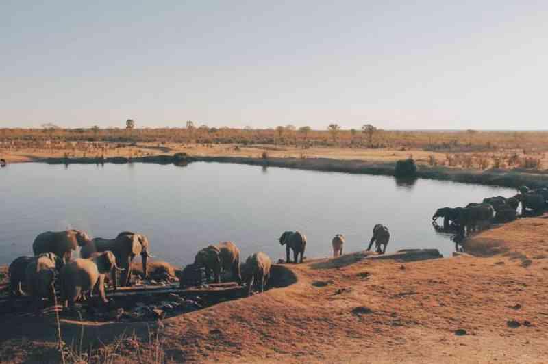 Zimbabué investiga morte de 12 elefantes em floresta perto de parque natural
