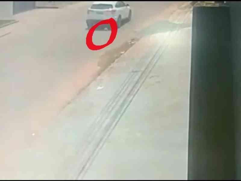 Advogada de motorista diz que gata não foi jogada de carro e que animal se escondeu embaixo de veículo no AC; veja vídeo