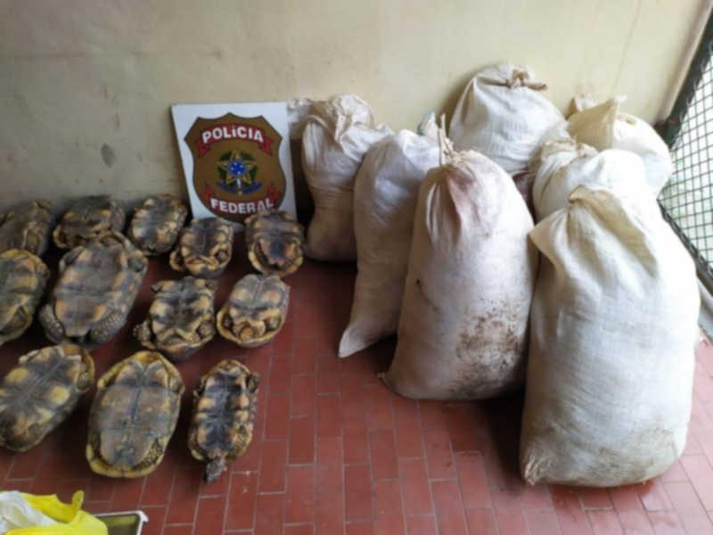 Mais de 400 kg de carne de caça e 19 jabutis são apreendidos em comércio no interior do Acre