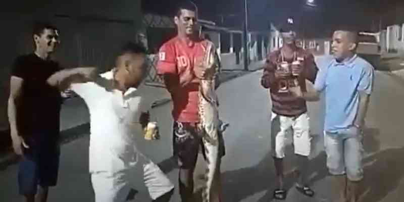 MPF denuncia por crimes ambientais grupo que maltratou e matou jacaré em Alagoas