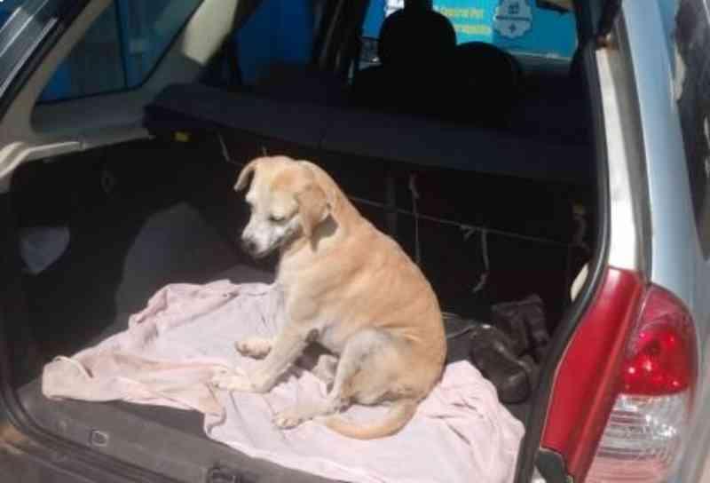 Homem é preso por arremessar cachorro de uma altura de sete metros em Silves, AM