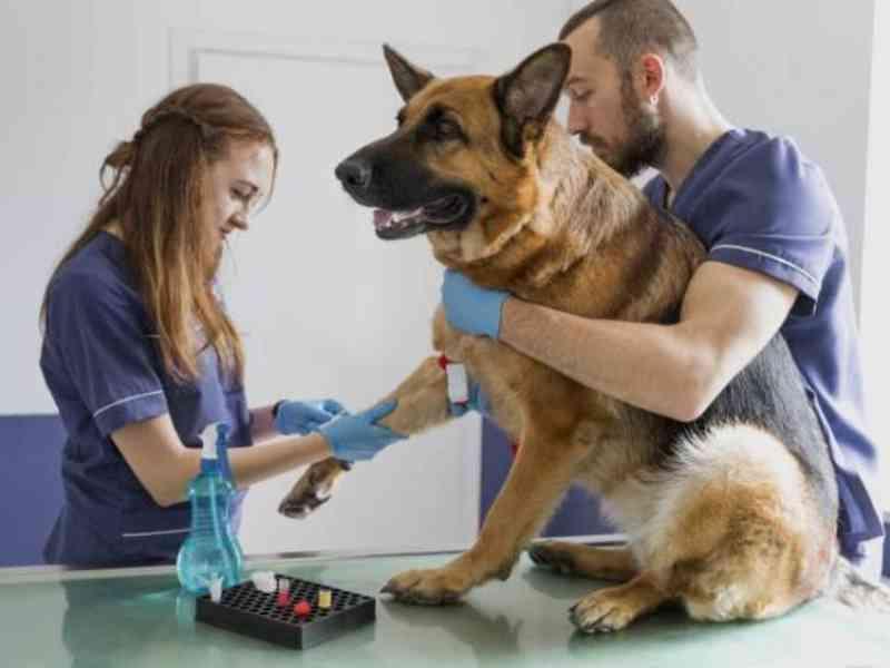Aprovado projeto que proíbe 'eutanásia' em cães e gatos saudáveis no Amazonas