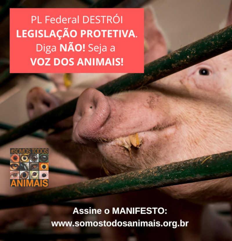 Projeto de lei 'Animal Não é Coisa', na verdade, prejudica os animais