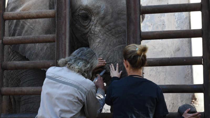 Seis elefantes que estão na Argentina aguardam transferência para MT