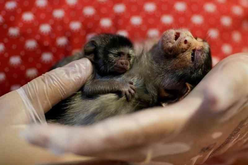 Animais silvestres são resgatados de incêndios na Amazônia