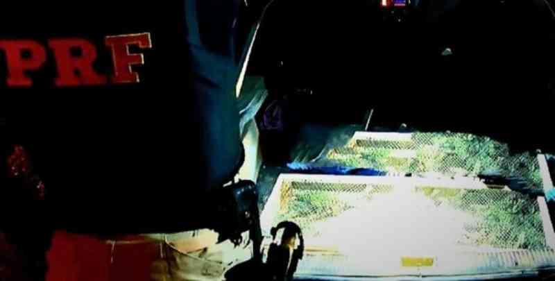 Motorista é flagrado transportando 40 iguanas em situação de maus-tratos em Alagoinhas, BA