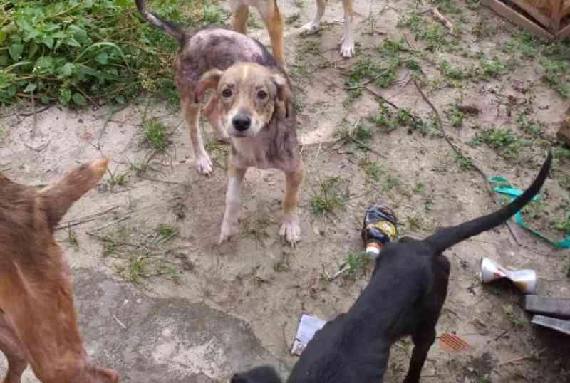 Abandono e maus-tratos a cães são denunciados em Dias D'ávila, BA