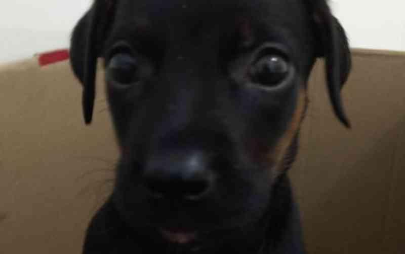 Veterinários acreditam que cachorrinha jogada de prédio em Itabuna (BA) sobreviveu após ter queda amortecida por carro; 'Milagre'
