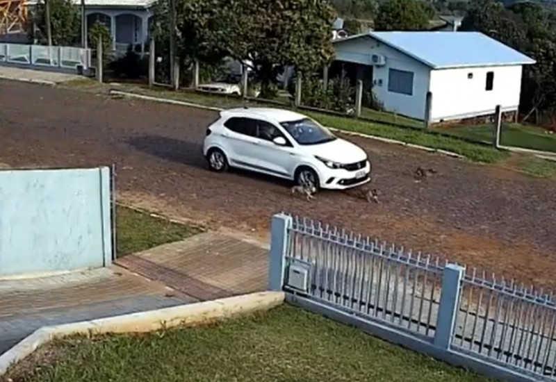 Polícia Civil identifica motorista que aumentou a velocidade e atropelou cachorro em Belmonte, BA