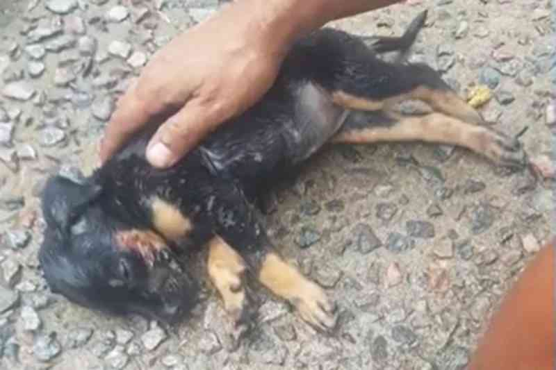 Homem arremessa filhote de cachorro pela janela e alega que 'teve um surto'