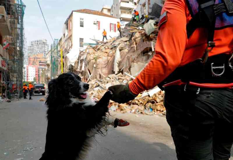 Veterinários portugueses em Beirute. Há 'uma imensidão de animais de rua em más condições'
