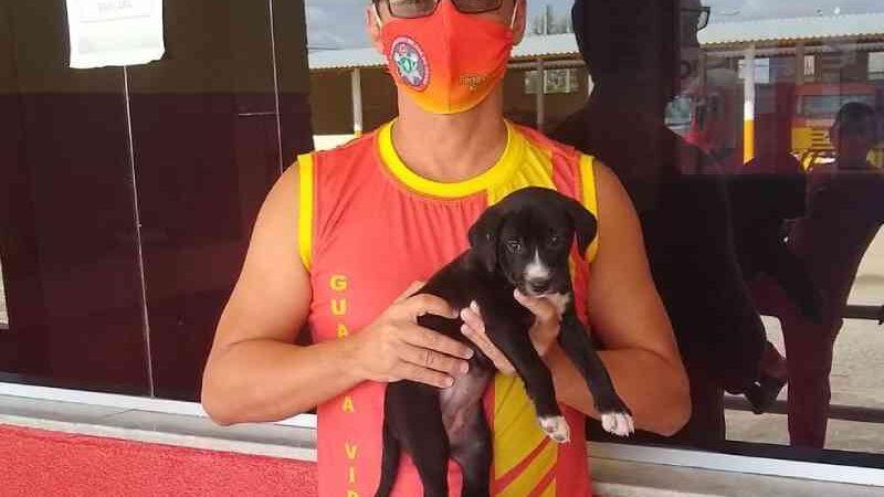 Bombeiros resgatam e adotam Beyoncé, uma cadela abandonada presa entre paredes em Iguatu, CE