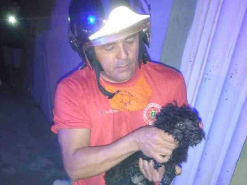 Bombeiros de Iguatu (CE) salvam 22 gatos e quatro cães intoxicados por incêndio