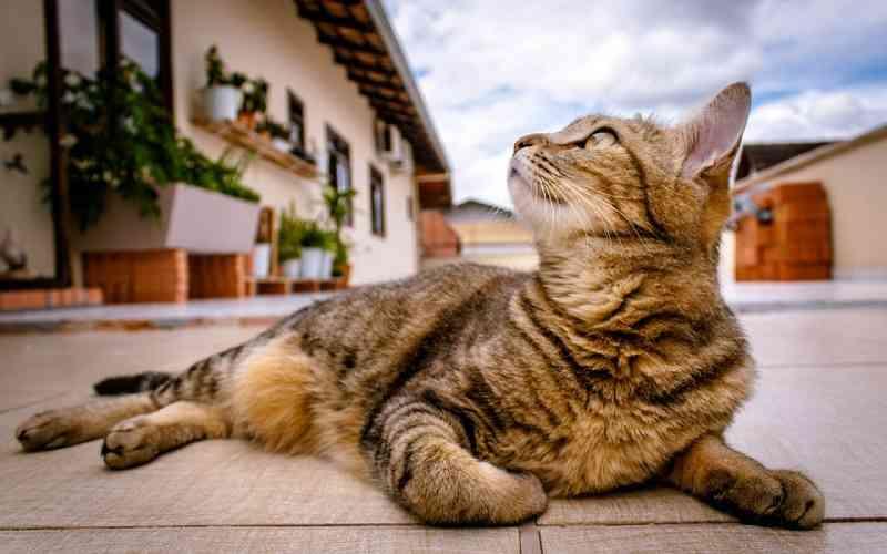 Condomínio no DF não pode proibir moradora de manter duas gatas em apartamento e em área comum do prédio