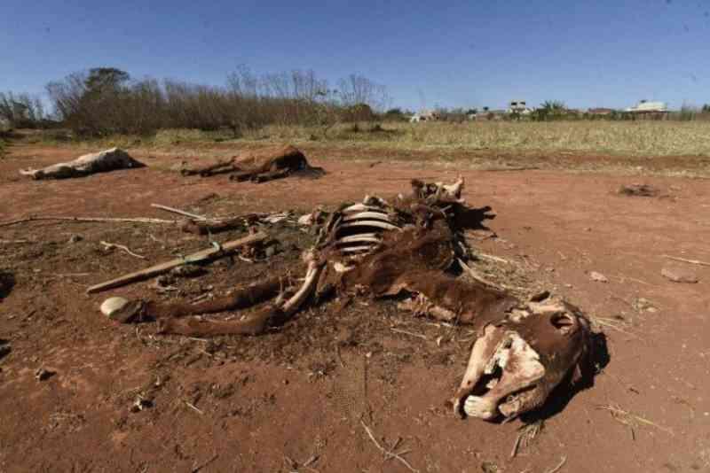 Cavalos doentes são deixados para morrer em local de desova no Sol Nascente
