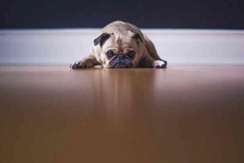 No DF, agressores de animais serão obrigados a pagar tratamento veterinário