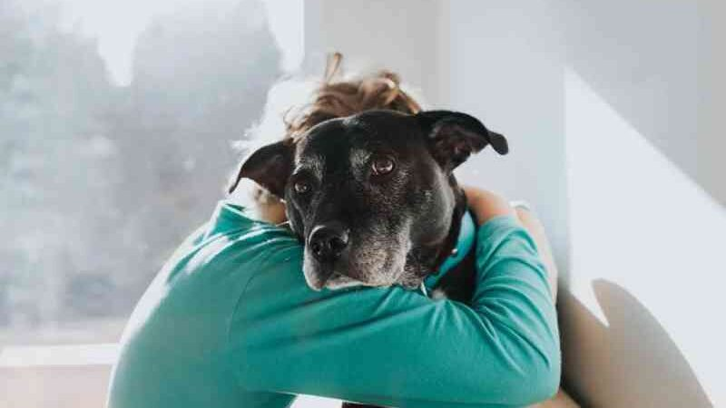 Idoso de 82 anos é flagrado estuprando cadela no DF