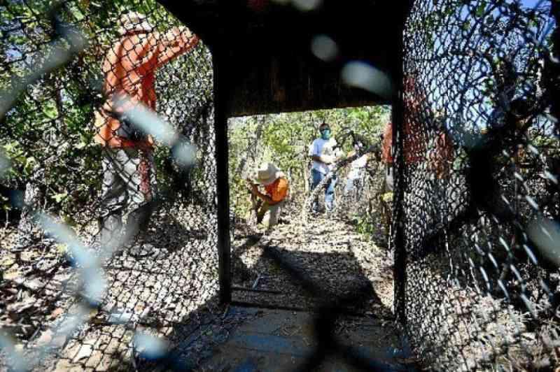 Passagem de fauna garante travessia segura para animais silvestres no DF