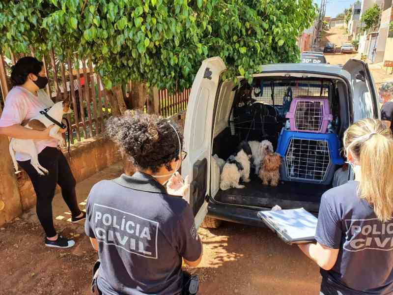 Polícia Civil do Distrito Federal e ONG resgatam 28 animais em situação de maus-tratos