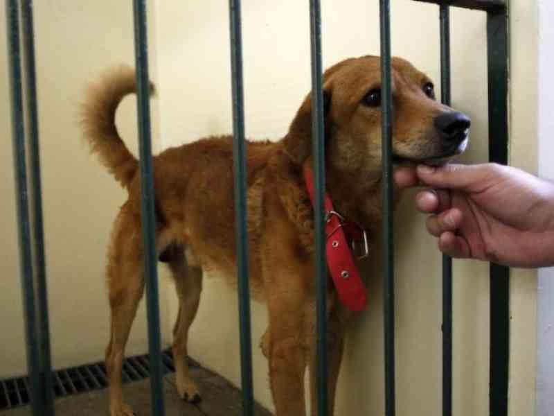 Proposta na Câmara Federal proíbe pessoa de reaver guarda de animal vítima de maus-tratos