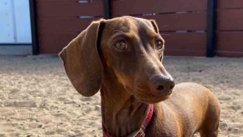 Deixada para trás por causa da Covid-19, cadela viaja 15 mil km para se juntar aos tutores