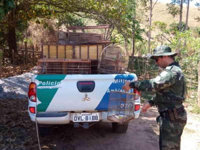 Polícia Ambiental apreende 46 aves silvestres em criadouro em Alegre, ES