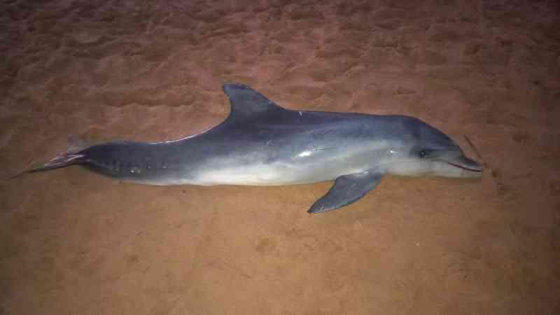 Golfinho é encontrado morto na praia de Manguinhos, na Serra, ES