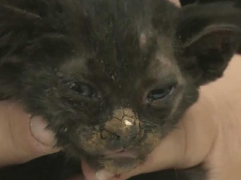 Animais de estimação são abandonados durante incêndio florestal na Califórnia