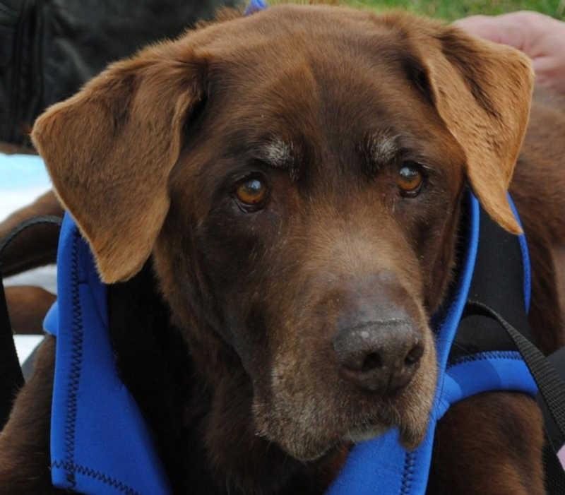 Segundo a entidade, Marty viveu até os 12 anos. — Foto: Marty's Place Senior Dog Sanctuary/Redes sociais