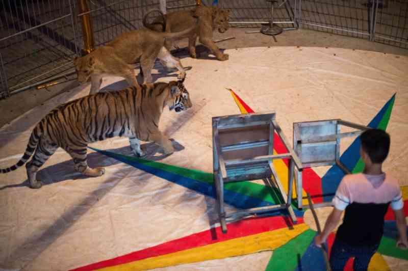 França vai proibir gradualmente os animais selvagens em circos itinerantes