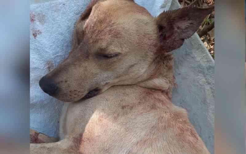 Homem mata cachorro a tiro em rua de Anápolis, GO; vídeo