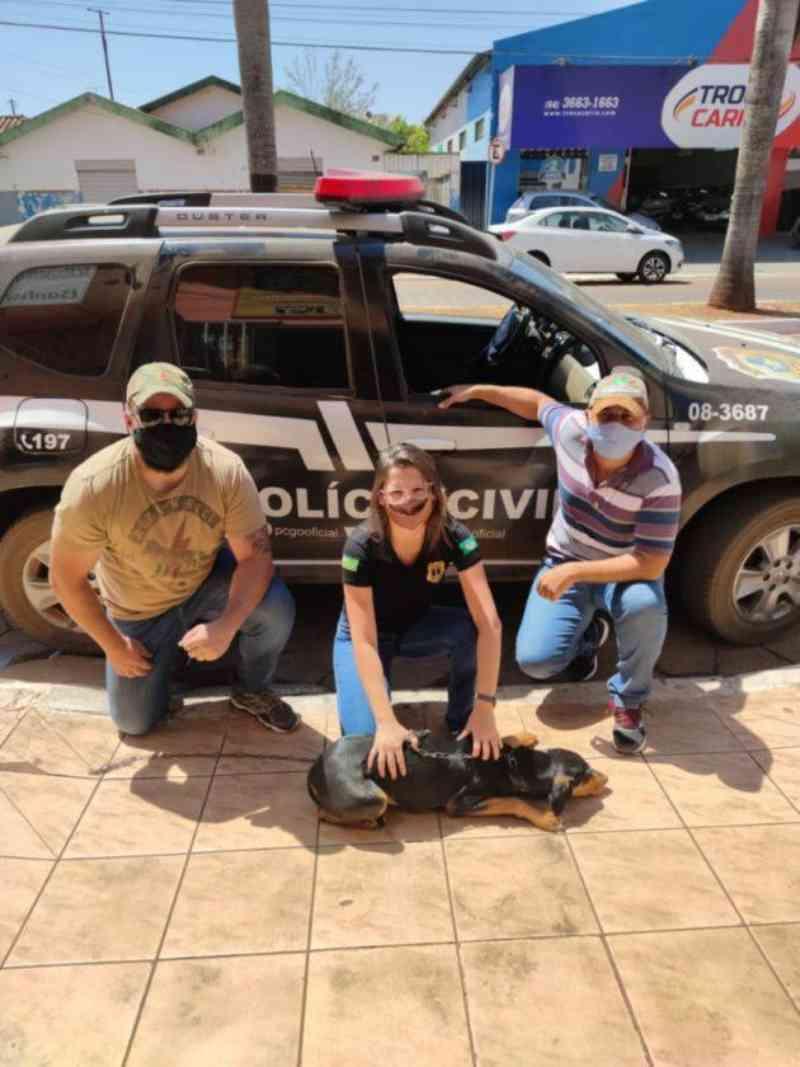 Polícia Civil resgata animais que sofreram maus-tratos de criança, em Caiapônia, GO