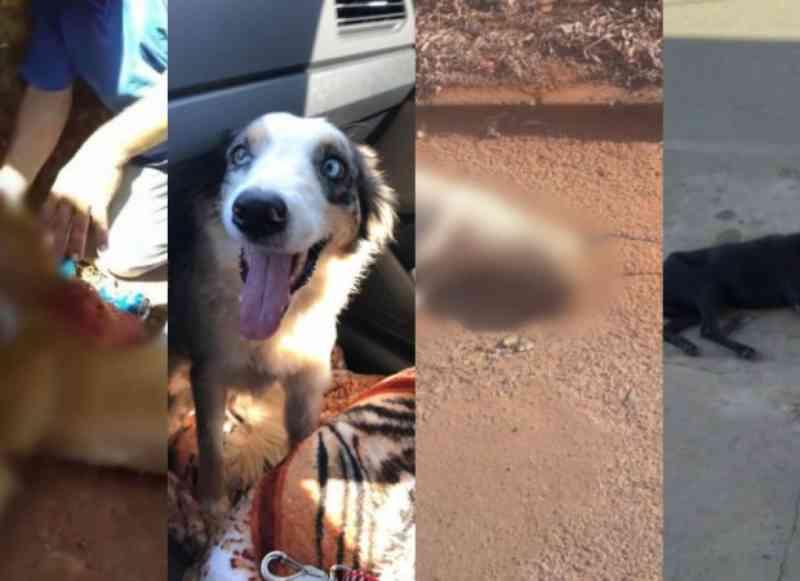 Moradores de Edealina (GO) denunciam 'envenenamento em série' de cães