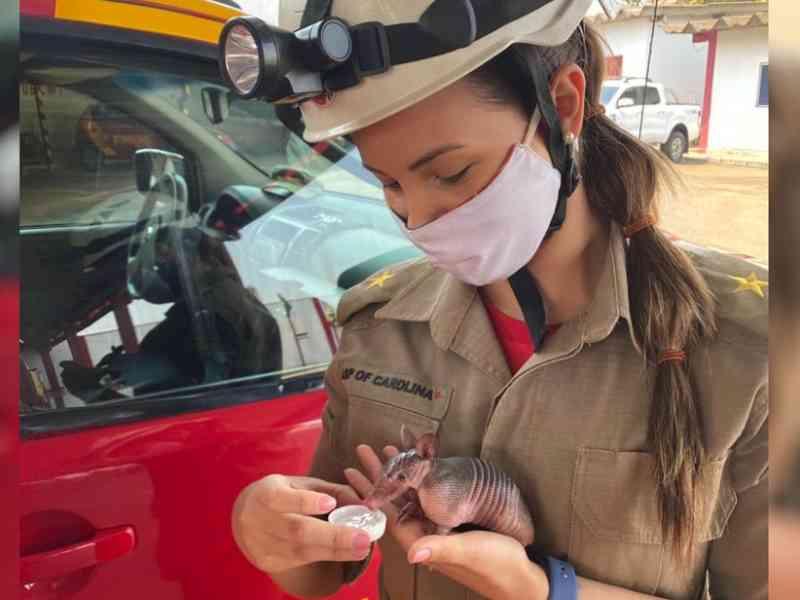 Bombeiros dão água a filhote de tatu resgatado ao fugir de incêndio, em Goiânia