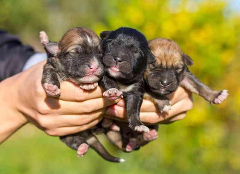 Vereadores aprovam lei que proíbe comércio de filhotes de cães e gatos em Goiânia, GO