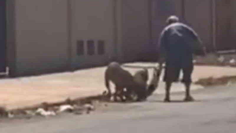 Homem é suspeito de colocar dois cães para atacar cachorrinha até a morte, em Luziânia, DF; vídeo