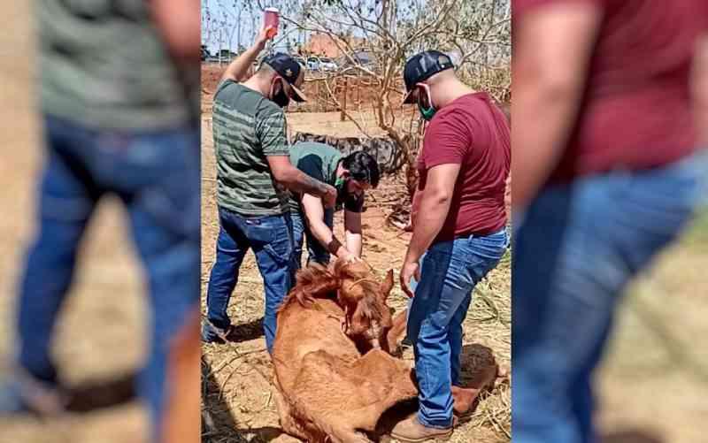 Força-tarefa resgata 11 cavalos que estavam sem comida e em condições de maus-tratos em chácara de Piracanjuba, GO