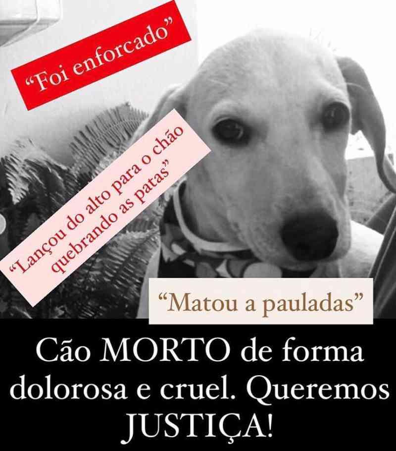 Cachorro adotado no Lar Amicão é torturado e morto a pauladas em Goiânia