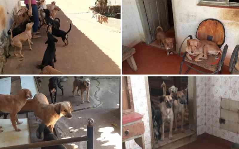 Irmão de idosa que teve AVC e não consegue mais cuidar dos 80 cães que resgatou pede ajuda para doar animais: 'Situação péssima'