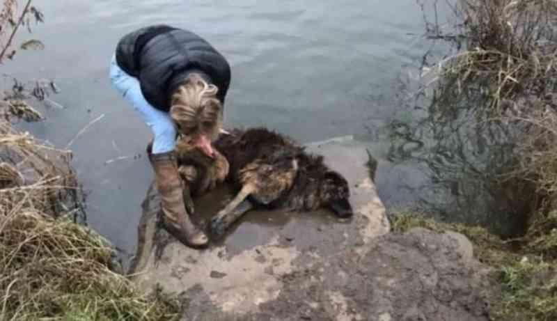 Cadela tem pedra amarrada no pescoço e é jogada em rio pelos próprios tutores