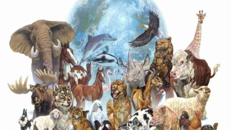 Introdução aos Direitos Animais