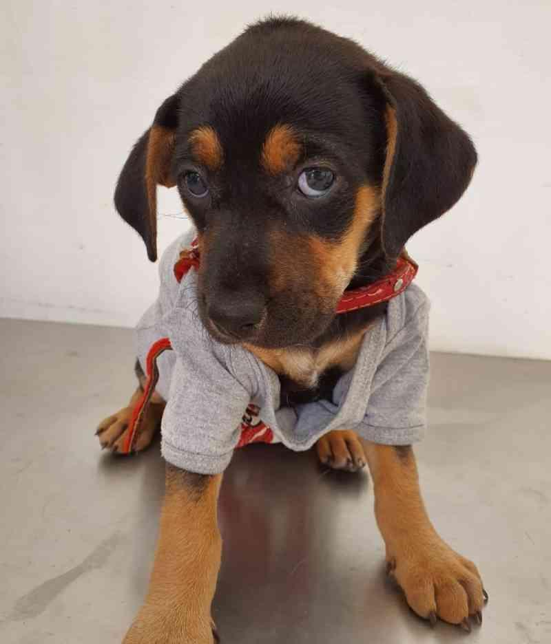 Solidariedade: projeto atende gratuitamente cães de pessoas sem-teto em Belo Horizonte, MG