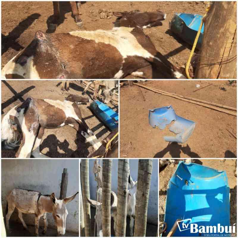 Ocorrência de maus-tratos a animais é registrada em Bambuí, MG