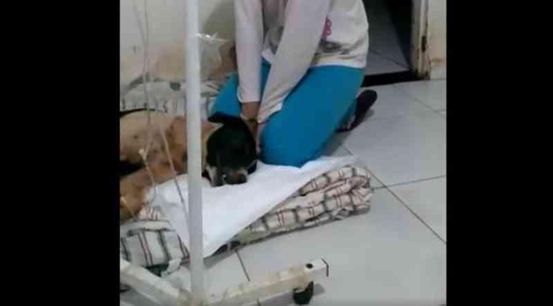 Três cadelas acolhidas por ONG morrem após serem envenenadas por autor desconhecido, em Uberaba, MG