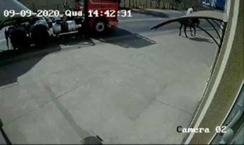 Câmera flagra homem montado em animal batendo contra lateral de carreta em MG; vídeo