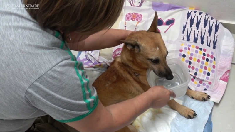 O Parque é dos Cães: uma história de amor e voluntariado