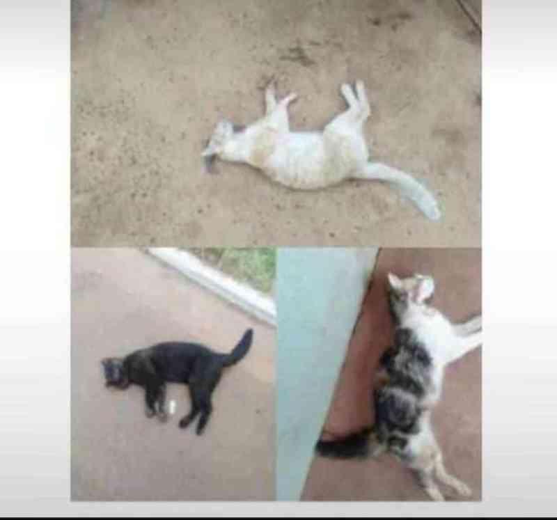 Envenenamento de animais em massa no Jardim Noroeste, em Campo Grande (MS), revolta moradores