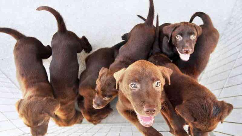 Campo Grande (MS) amplia rigor contra maus-tratos a animais e proíbe a venda de cães e gatos em feiras ou ruas da cidade