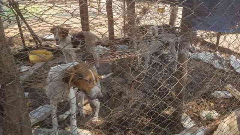 Após um ano de salvamento de cães explorados para caça, ONG questiona descaso e impunidade em Campo Grande, MS