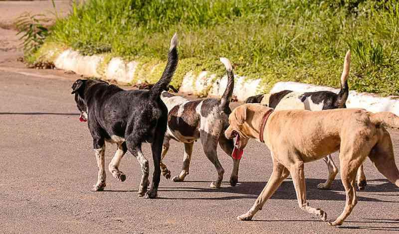 UPA destinada aos animais de rua ainda não tem previsão de inauguração em Campo Grande, MS